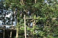 黃金風鈴木